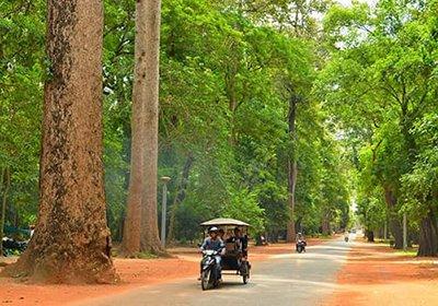 Angkor Wat road