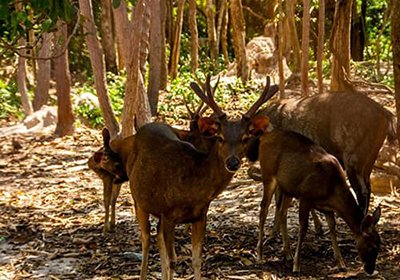 Phnom Tamao wildlife Rescu